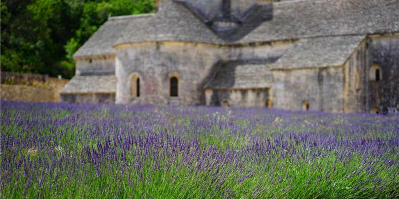 Campos de lavanda en el sur de Francia